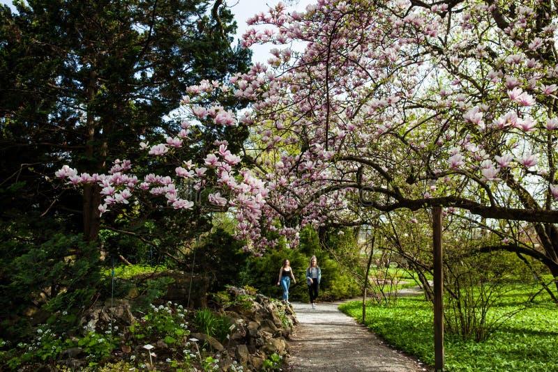 Folk på botaniska trädgården i en härlig tidig vårdag på lägre stad i Zagreb royaltyfri fotografi