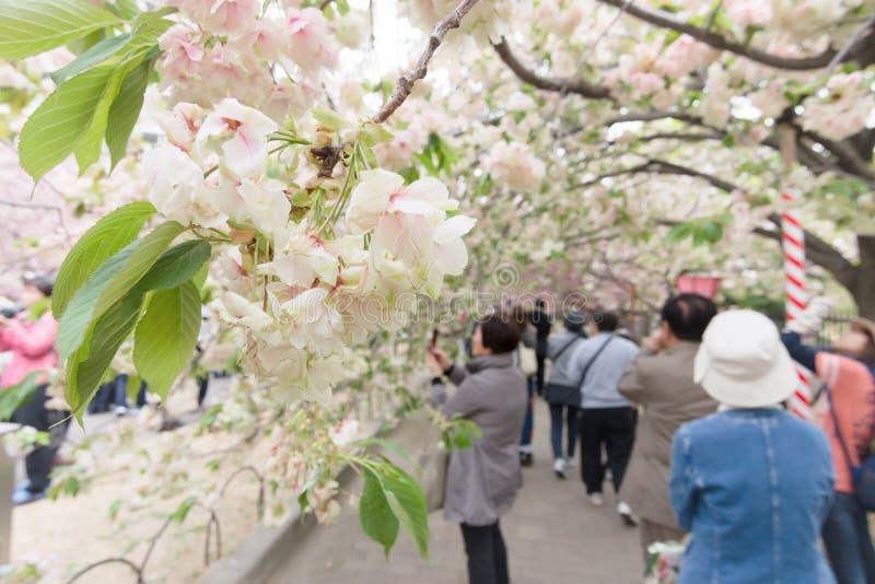 Folk på den Japan mintkaramellen arkivbilder