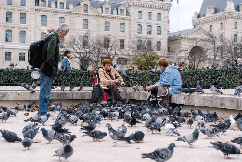 Folk som framme matar duvorna av den Notre-Dame fyrkanten, Paris, Frankrike royaltyfri foto