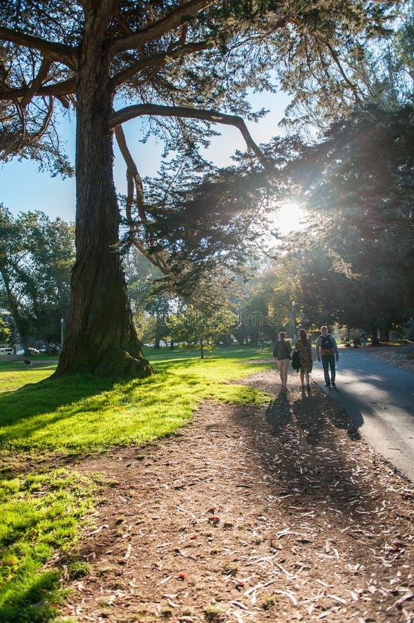 Folk som går i Golden Gate Park i San Francisco California USA arkivfoton