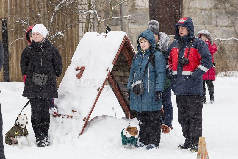 folk som går med hundkapplöpning i vintern, ledare arkivbild