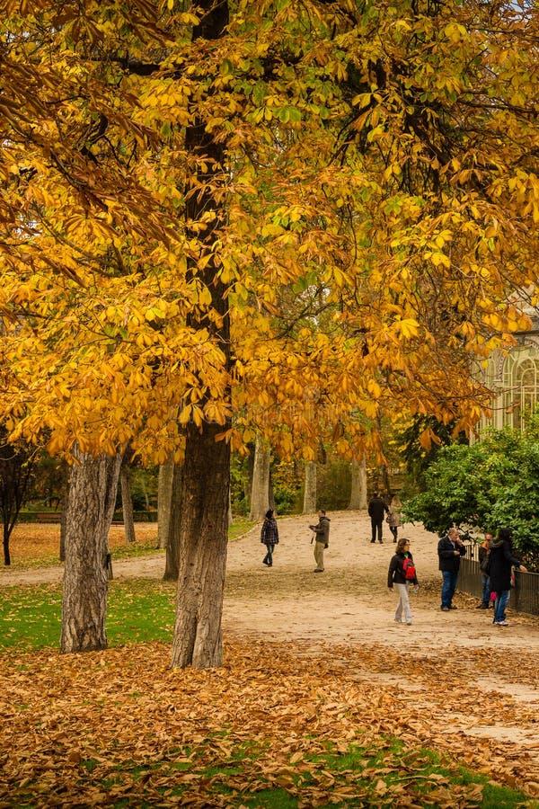 Folk som går på en höstväg under ett gult träd royaltyfri bild