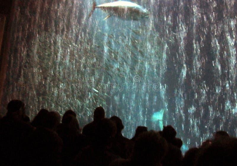 Folk som håller ögonen på marin- liv royaltyfri foto