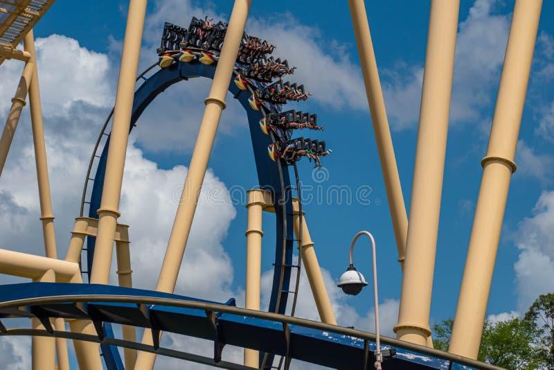 Folk som har den roliga fantastiska Montu rollercoasteren på Busch trädgårdar 15 fotografering för bildbyråer
