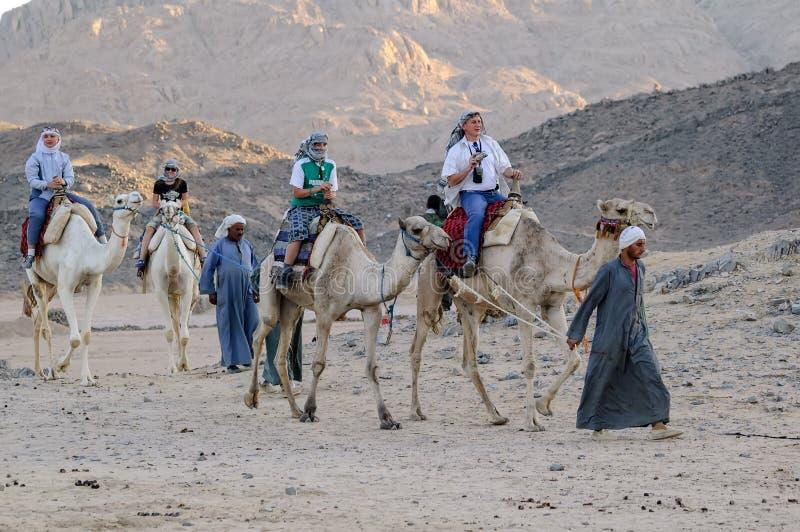 Folk som reser på kamel i den Egypten öknen arkivfoton
