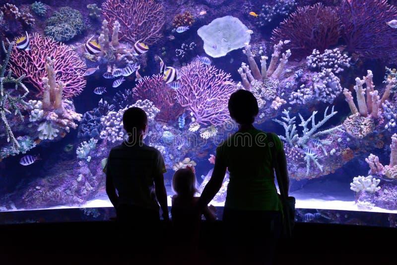 Folkblick på akvariet fotografering för bildbyråer