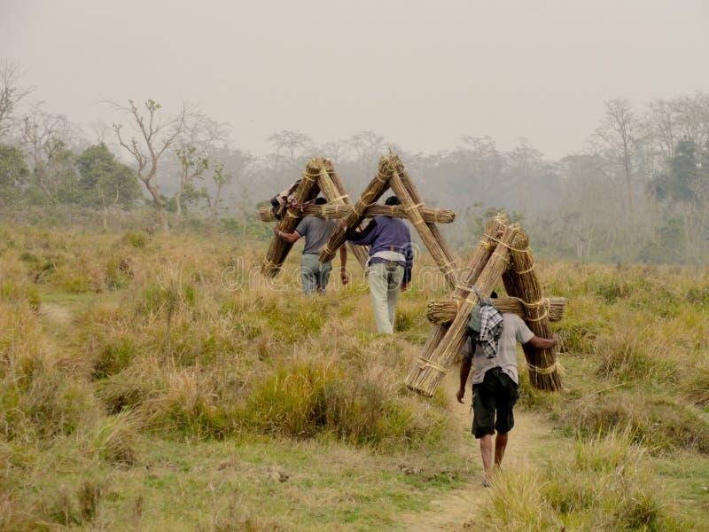 Folket bär gräs i den Chitwan nationalparken Nepal arkivfoto