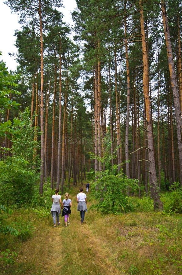 Folket går i den Roztocze Polen skogen royaltyfria bilder