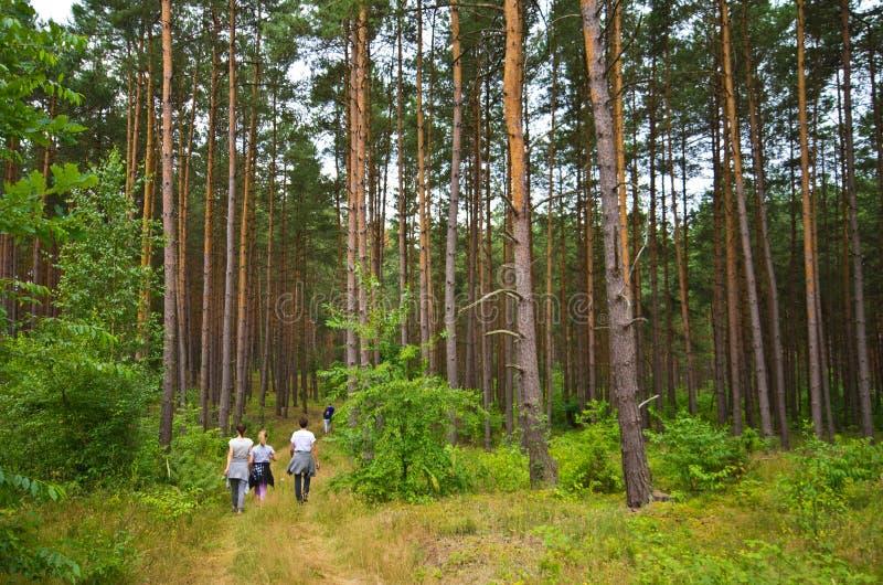 Folket går i den Roztocze Polen skogen fotografering för bildbyråer