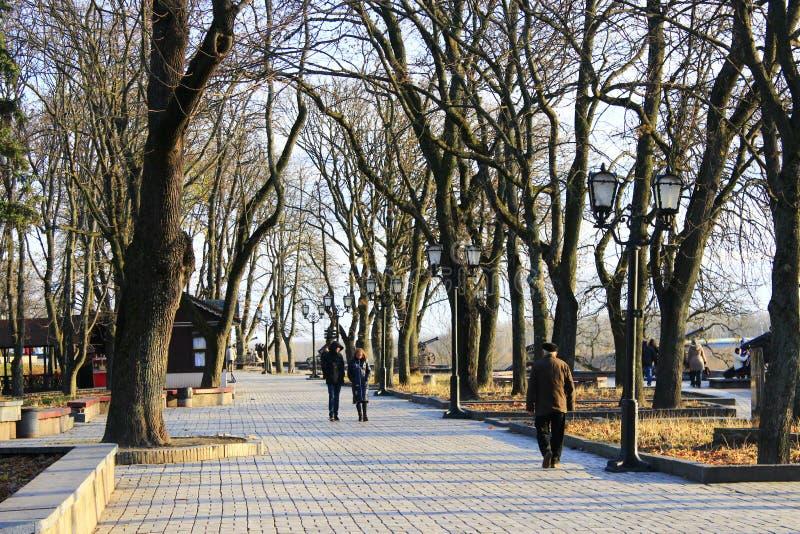 Folket går i det höstligt parkerar med stora träd royaltyfria foton