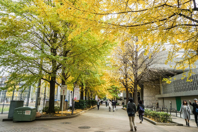 Folket går i ginkgoen parkerar i hösten som tas i Tokyo Japan royaltyfri fotografi
