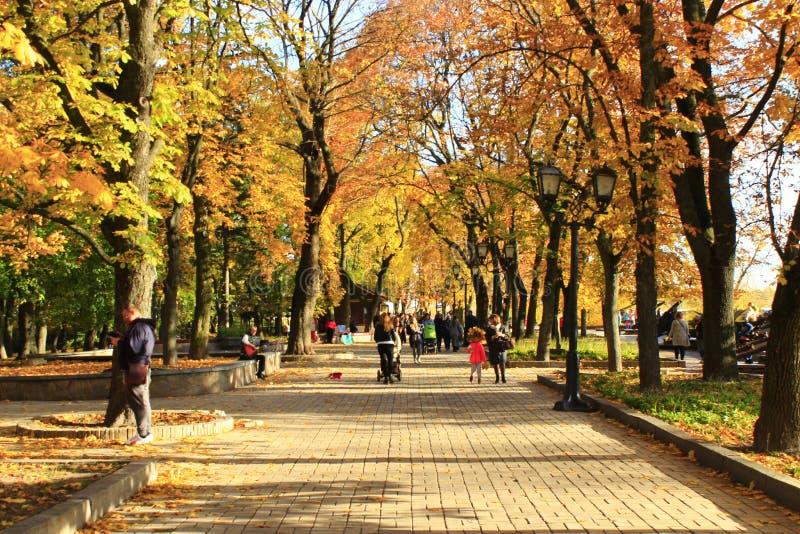 Folket går på höstlig stad parkerar Säsong av hösten med gul lövverk på träd royaltyfri fotografi
