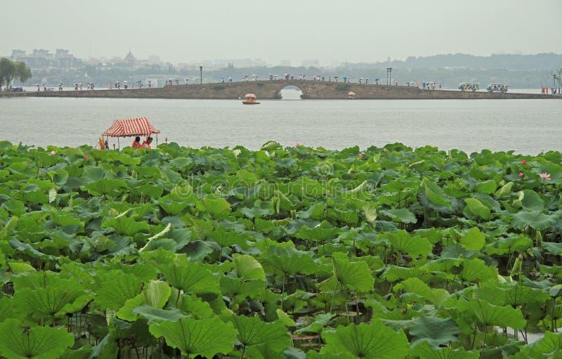 Folket korsar den västra sjön i Hangzhou vid bron royaltyfria foton