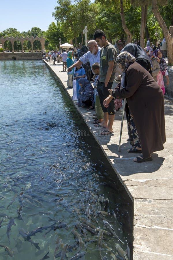Folket matar den sakrala fisken på Balikli Gol royaltyfri foto