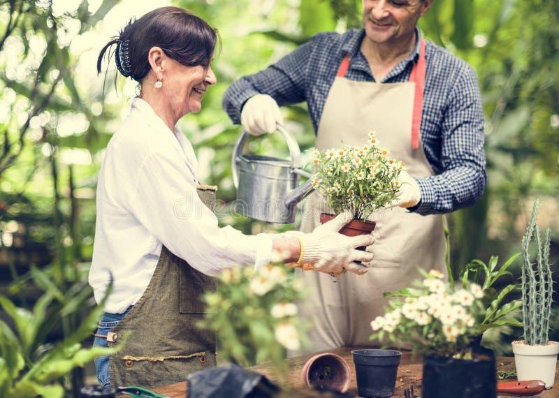 Folket planterar blommor tillsammans royaltyfri foto