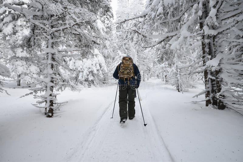Folket som fotvandrar i berg, övervintrar skogen som täckas av snö royaltyfria bilder