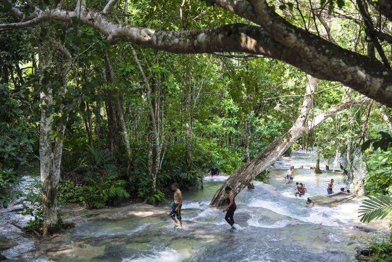 Folket som upp klättrar floden för Dunn ` s, faller, Jamaica royaltyfri bild