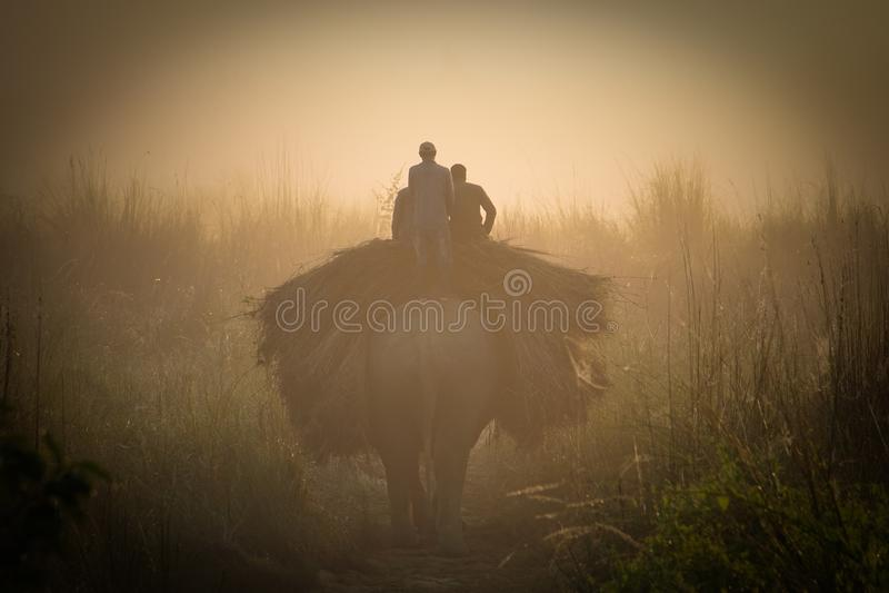 Folket transporterar gräs på elefant i den Chitwan nationalparken i Nepal royaltyfri fotografi