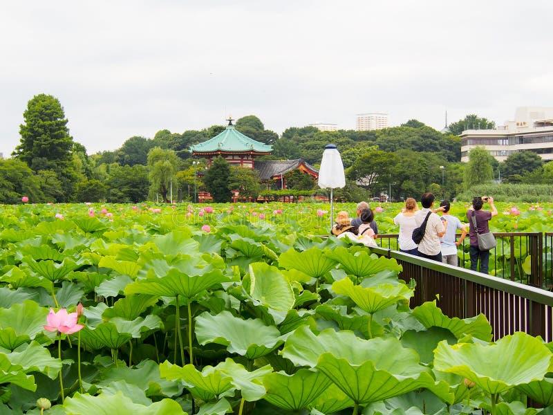 Folket tycker om att ta fotografiet på lotusblommadammet i Ueno parkerar royaltyfri foto