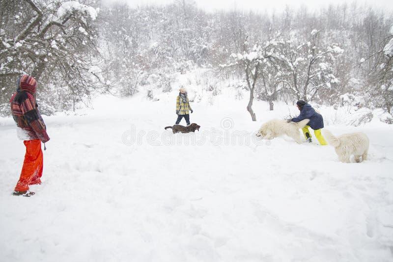 Folket utbildar hundkapplöpning i vinterskog på snö royaltyfria bilder