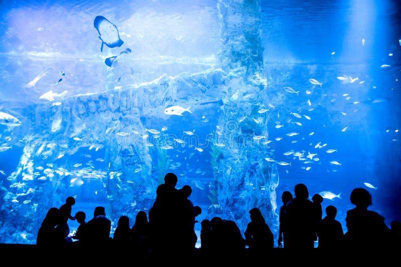 Folkkontur som ser många fisk royaltyfri fotografi