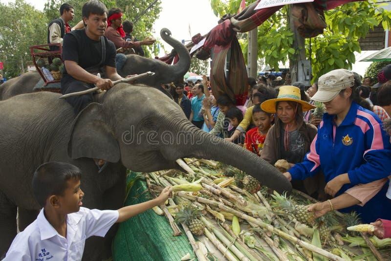 Folkmatning behandla som ett barn elefanten på elefantbuffé n Surin, Thailand royaltyfria bilder