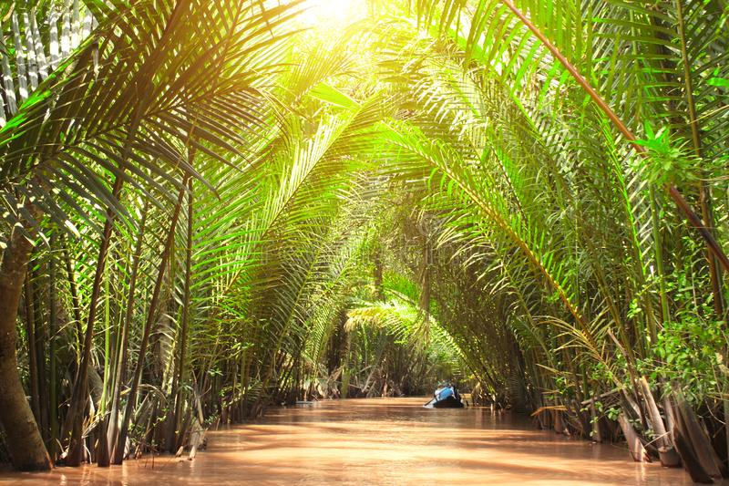 Folkrodd i deltan av Mekong River, Vietnam royaltyfria bilder