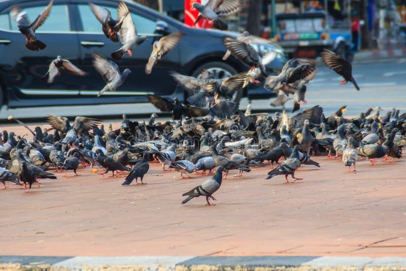 Folla del piccione sulla via di camminata a Bangkok, Tailandia sfuocatura fotografie stock