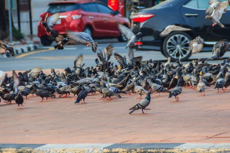 Folla del piccione sulla via di camminata a Bangkok, Tailandia sfuocatura immagini stock libere da diritti