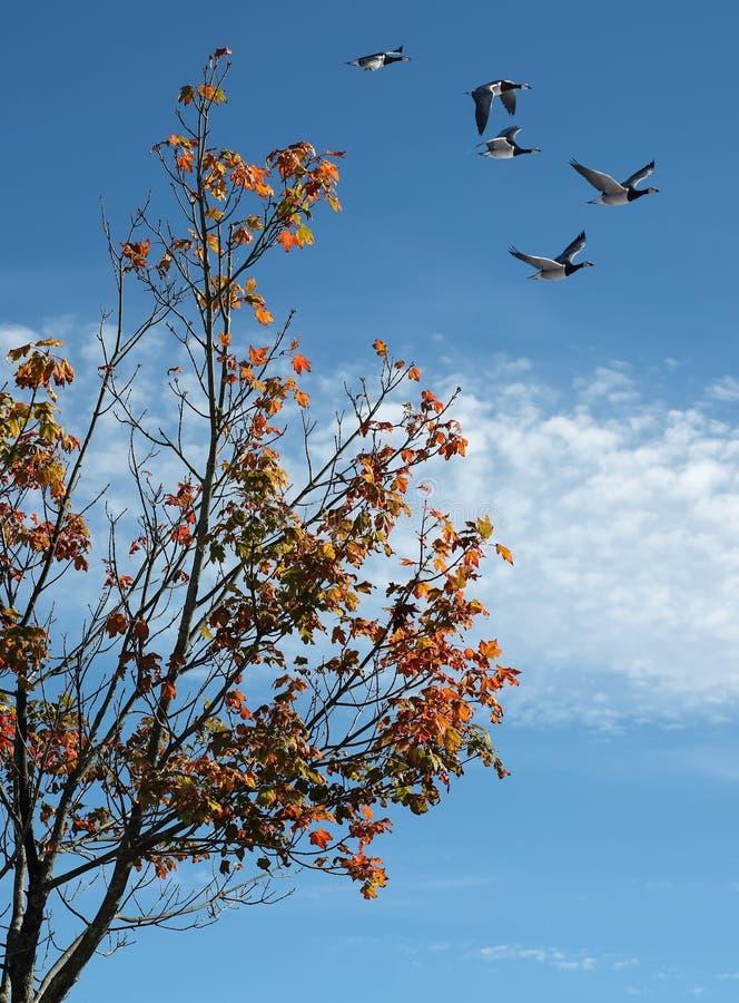 Follaje brillante del otoño con el grupo de pájaros fotos de archivo libres de regalías