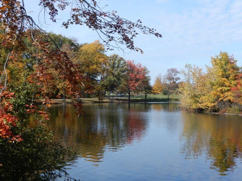 Follaje colorido del forestand del otoño reflejado en el lago tranquilo en los E.E.U.U. fotos de archivo libres de regalías