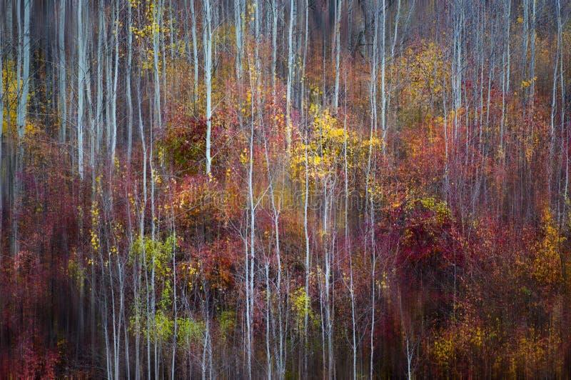 Follaje colorido del otoño con una sensación painterly fotos de archivo
