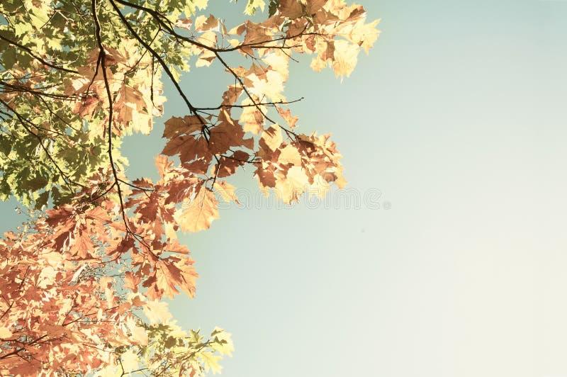 Follaje colorido en el otoño del fondo del cielo de las hojas de otoño del parque del otoño fotografía de archivo