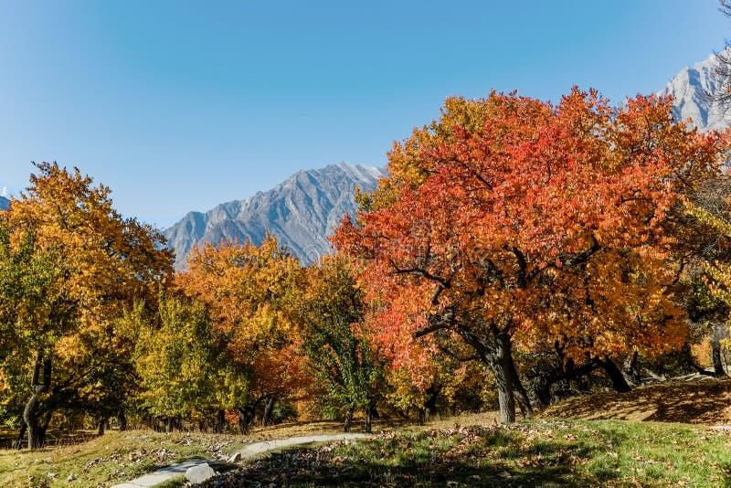 Follaje colorido en otoño en el jardín real de Altit imagen de archivo