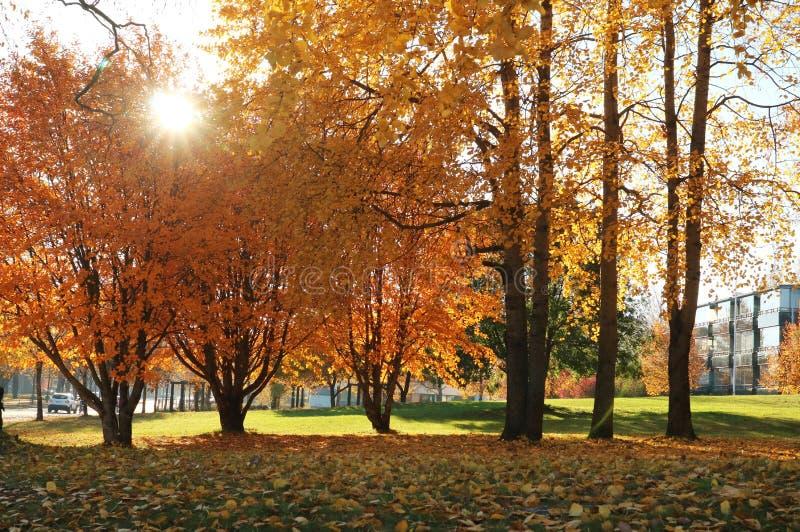 Follaje de Autumn Park de oro en los rayos del sol fotografía de archivo