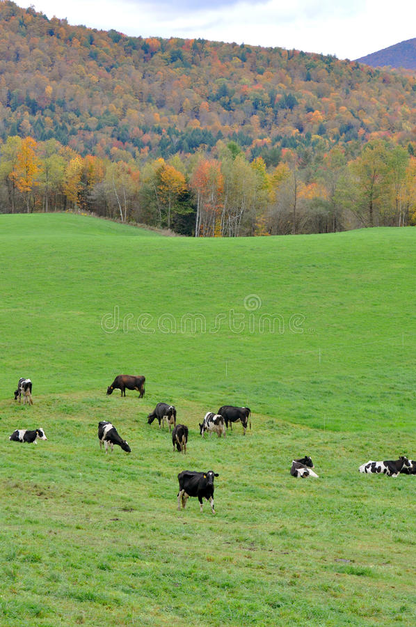 Follaje de caída de Vermont, montaje Mansfield, Vermont foto de archivo