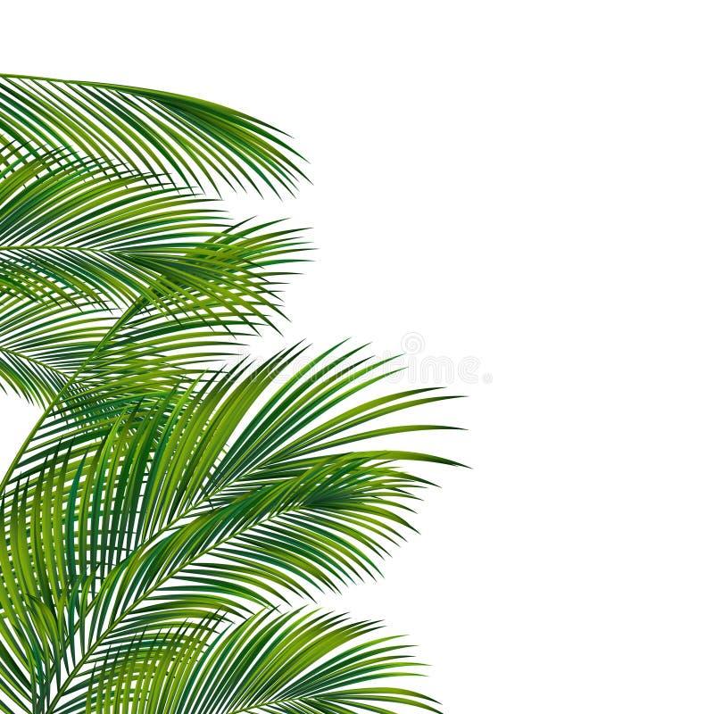 Follaje de la palmera imagen de archivo libre de regalías