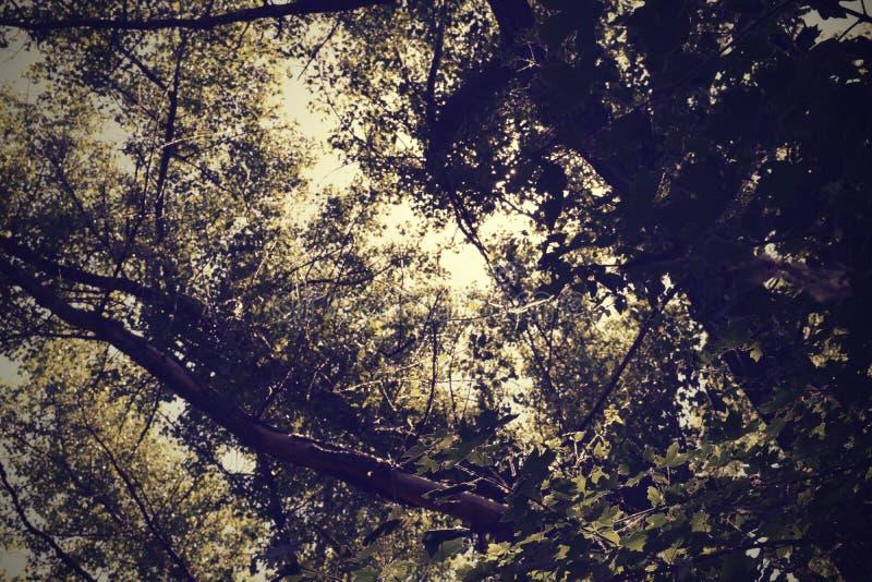Follaje de los árboles de la estepa fotos de archivo