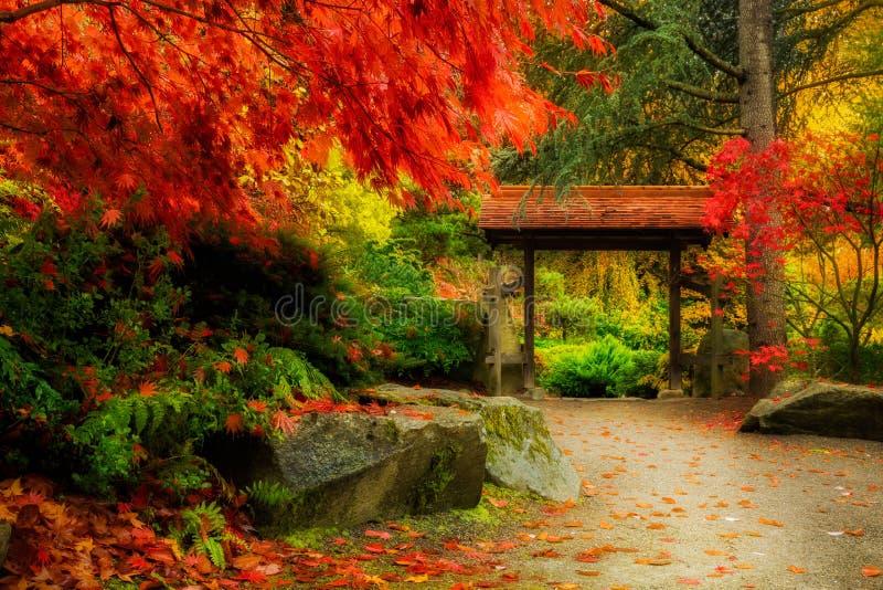 Follaje de otoño en el jardín de Kuobota, Seattle fotos de archivo libres de regalías