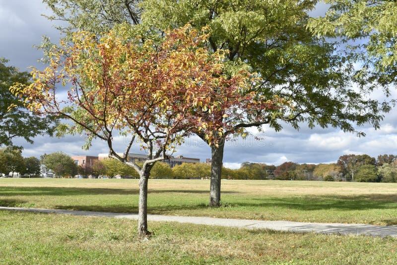 Follaje de otoño en el parque fotos de archivo libres de regalías