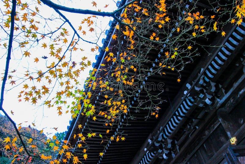 Follaje de otoño en el templo de Eikando, Sakyo-ku, Kyoto, Japón foto de archivo