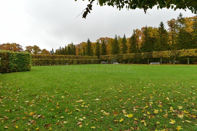 follaje de otoño en la hierba verde y los árboles amarillos imagen de archivo libre de regalías