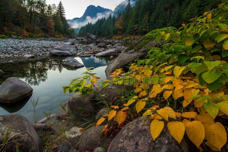 Follaje de otoño en la orilla del río de Skykomish, Washington State fotografía de archivo libre de regalías
