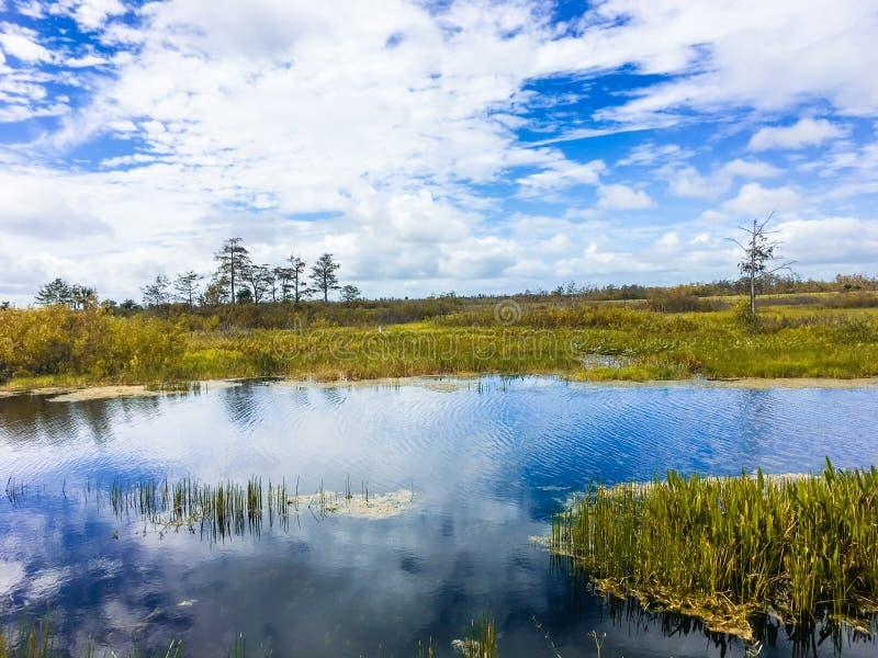 follaje de otoño en los pantanos fotos de archivo