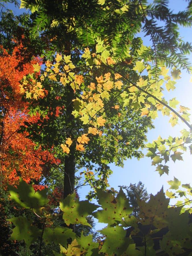 Follaje de otoño en Maine fotografía de archivo