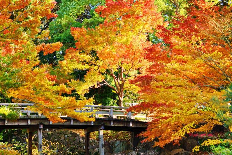 Follaje de otoño en Nagoya, Japón fotografía de archivo libre de regalías
