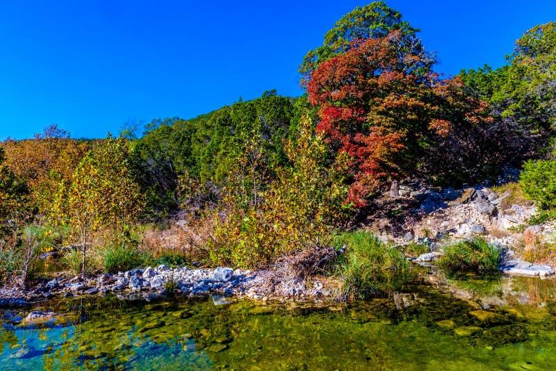 Follaje de otoño hermoso brillante en árboles de arce imponentes fotos de archivo