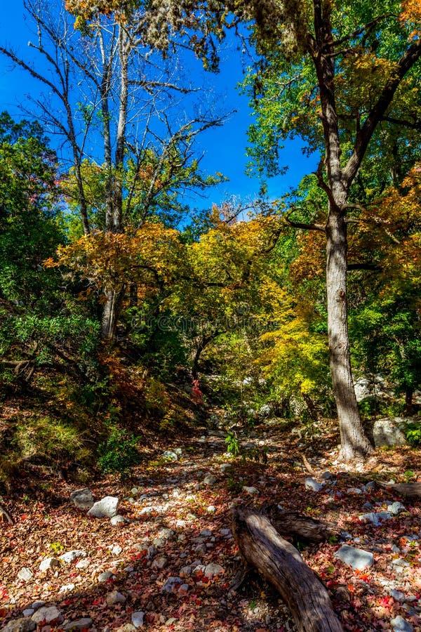 Follaje de otoño hermoso brillante en árboles de un arce imponentes en Tejas imagen de archivo