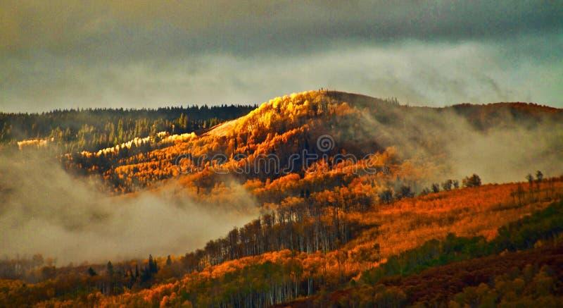 Follaje de otoño increíble de Colorado fotos de archivo