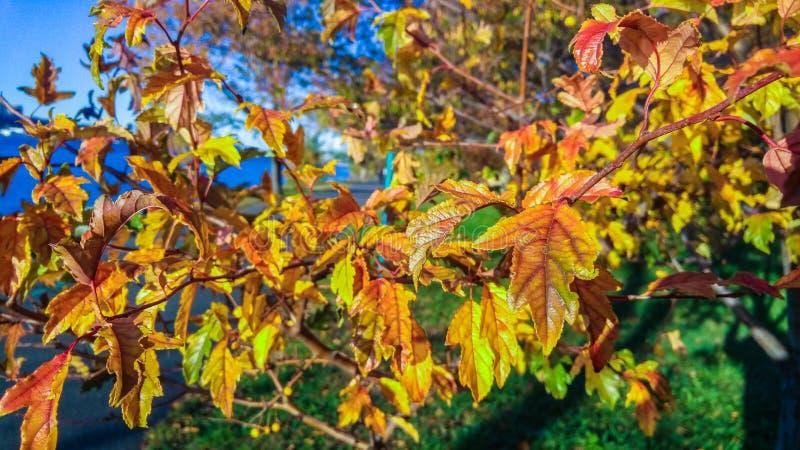 Follaje de otoño multicolor, en una tarde hermosa del otoño en New York City fotografía de archivo libre de regalías